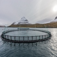 Fishery aquaculture